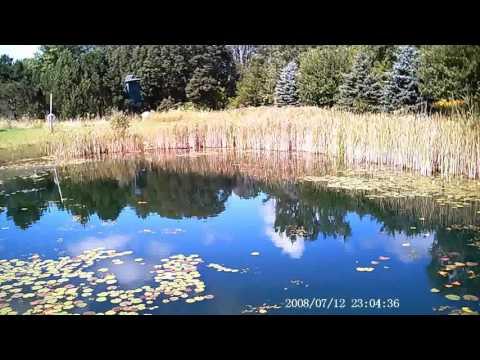 Huge pond walleye doovi for Koi pond kettering