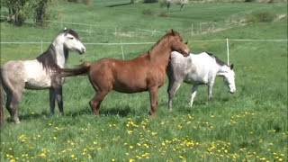 Repeat youtube video Decksprung ~ natur mating, at * The Wild Horse Place