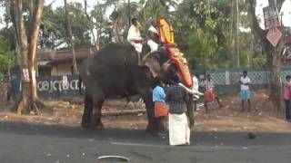 Kerala Elephant in Anchal Agasthyacode Temple Festival 2014 Alancherry