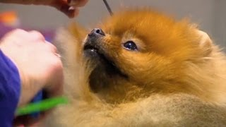 Cutest Dogs Ever! (westminster Dog Show 2012)