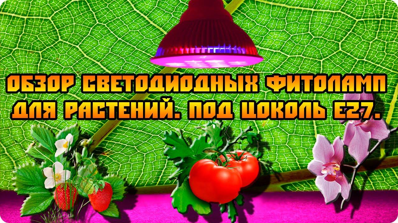 Фитолампы – осветительные приборы, предназначенные для подсветки растений, выращиваемых в закрытых помещениях, теплицах и оранжереях в.