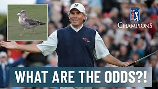 WHAT ARE THE ODDS?! | Most unique shots on PGA TOUR Champions