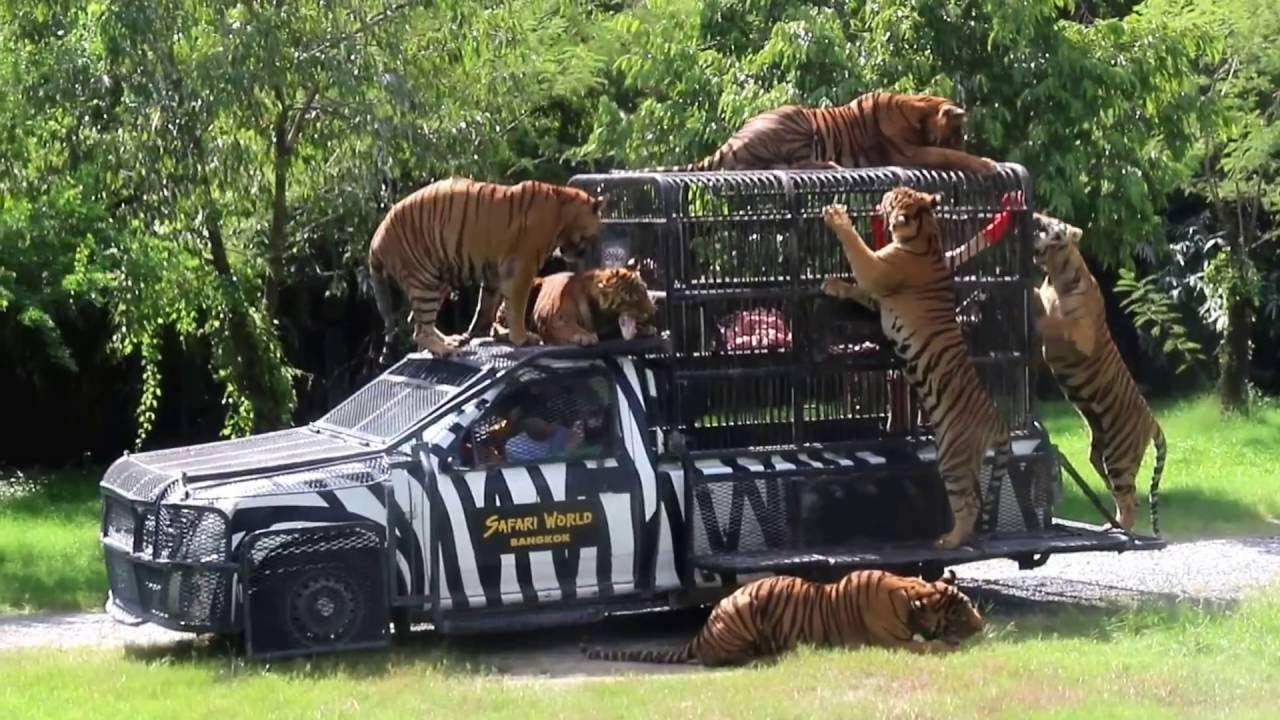 Safari World Bangkok - YouTube