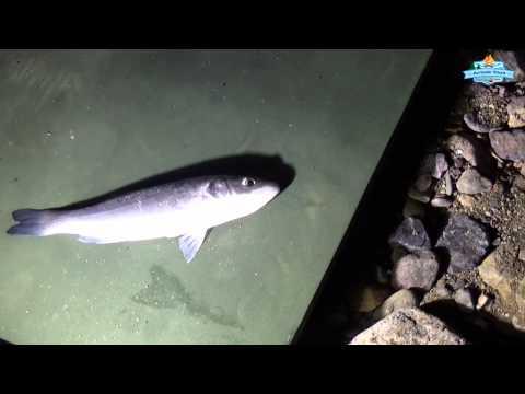 kıyıdan balık avı denemeleri 15 nisan 2015