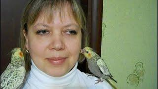 Попугаи нимфы - кореллы Кузя и Фиби (разведение) 20 Птенецы корелл. Breeding Corell.
