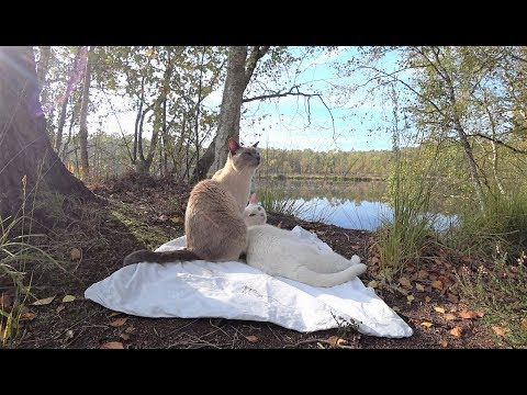 Cats Hike in Wild Forest (No Harness/Leash) || Katzen wandern im wilden Wald (Ohne Geschirr/Leine)