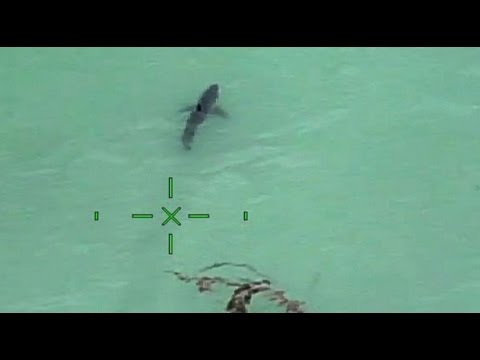 Orange County Sheriff's helicopter warns paddle-boarders they're next to 15 great white sharks