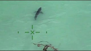 Video Orange County Sheriff's helicopter warns paddle-boarders they're next to 15 great white sharks download MP3, 3GP, MP4, WEBM, AVI, FLV Juni 2017