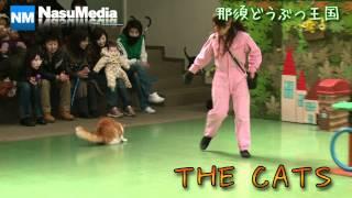 2012年3月3日に那須どうぶつ王国の猫のパフォーマンスショー「ザ...