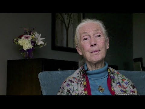 Jane Goodall Opposes Delisting & Hunting of Greater Yellowstone Grizzlies