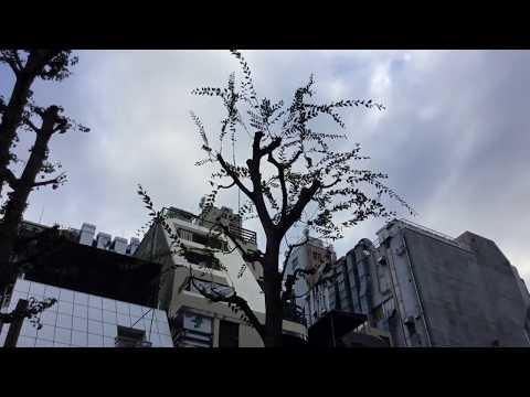 Fukushima Aftermath: Tokyo Downtown, Shinjuku, 10/04/2017