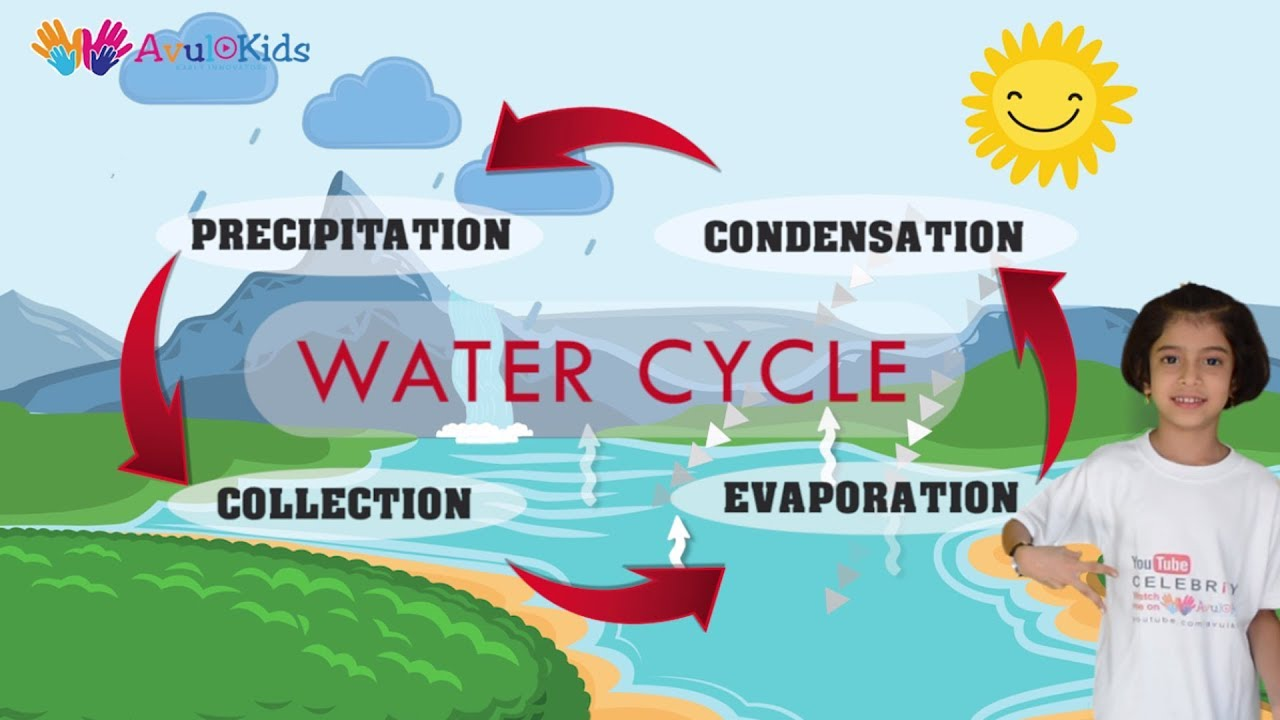 Water Cycle Water Cycle For Kids Evaporation Condensation Precipitation Collection Youtube