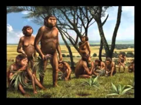 Australopithecus Africanus (Physical anthropology)