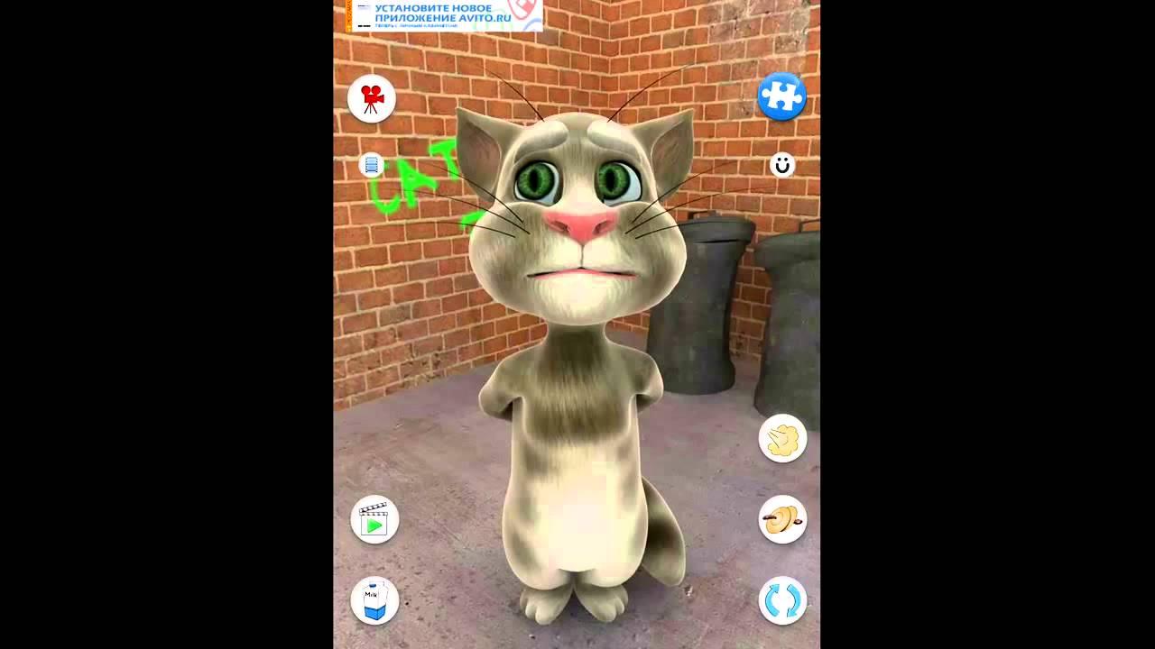 Смотреть видео про говорящего кота