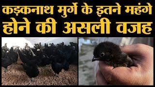 Jhabua के मशहूर Kadaknath मुर्गे की पूरी कहानी