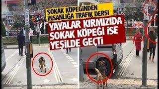 İSTANBUL / SANCAKTEPE / SARIGAZİ / SOKAK KÖPEĞİ / TRAFİK DERSİ