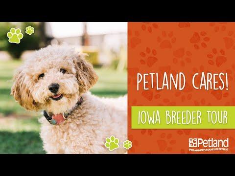 Petland Iowa Breeder Tour