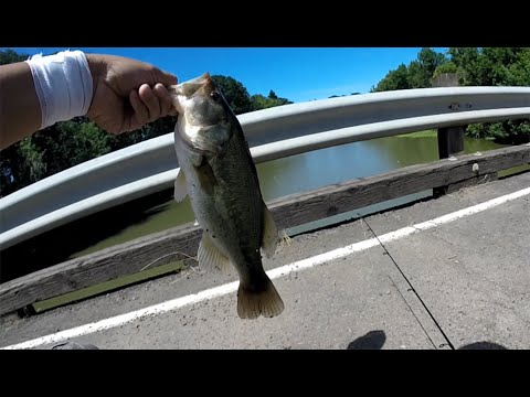 Bass Fishing Near Eugene