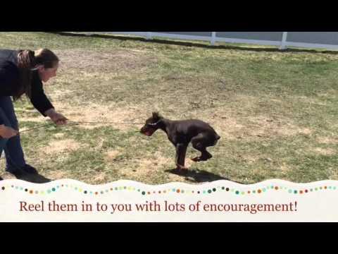 Teaching Fetch Foundation