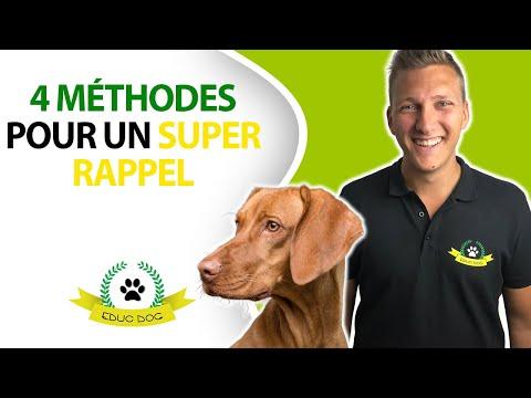 Anti Aboiement - 15 techniques à savoir - Éducateur canin - 15 minutes par jour
