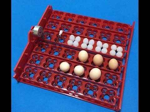 Лоток яйцо