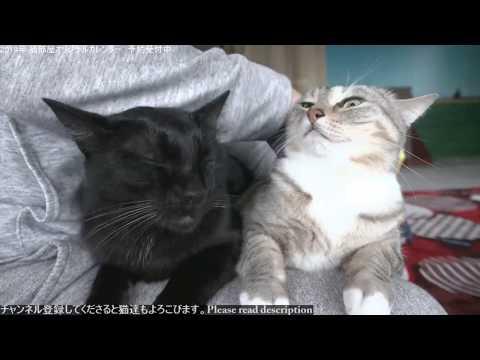 2018.10.23 猫日記(10/27 猫部屋メンテの為)   Cat's diary. October 23, 2018 【Miaou みゃう】