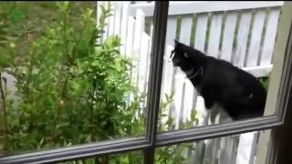 кошки ржака смешные видео смейся до слез 2