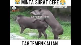 penyebab populasi tapir semakin menurun