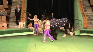 Хыдыров, Мащенко   Дрессура собак на лошади