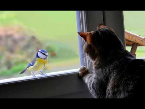 Синица Стучит в Окно, вот что Это Может Значить?
