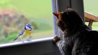 видео Синица села на окно: примета, к чему