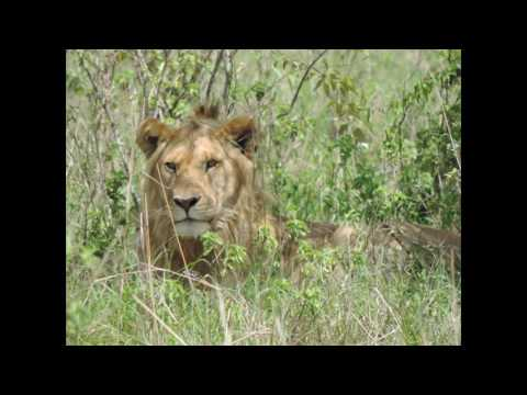 Kenya Safari Holidays-Tanzania Tours