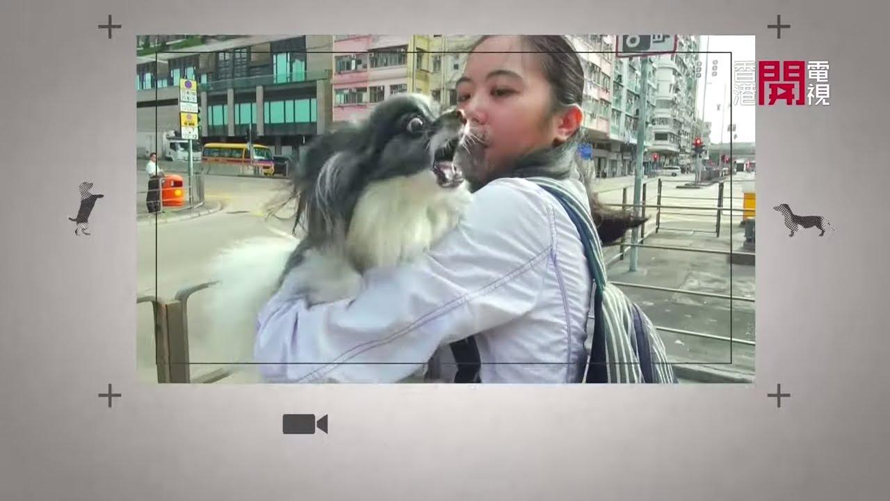 蝴蝶犬見車仔失控狂吠!Eric Ko 糾正狗主放狗壞習慣 (煉狗術師S2 - EP02-1) - YouTube