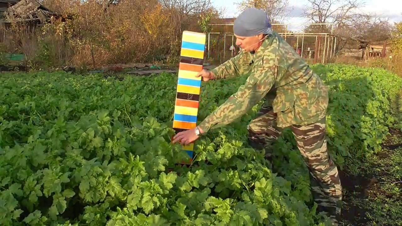Посадка семян огурцов в горчицу - YouTube