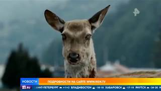 В мясе оленей обнаружен вирус, способный уничтожить человечество
