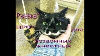 """Визит в приют для  бездомных животных """"Ржевка"""" 2 часть СПб"""