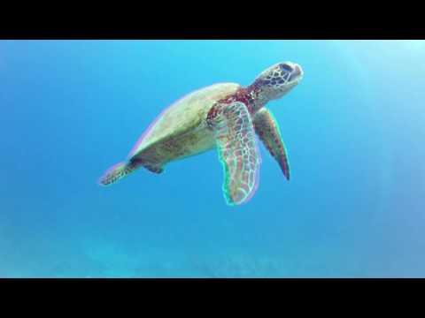 3D Ocean Life