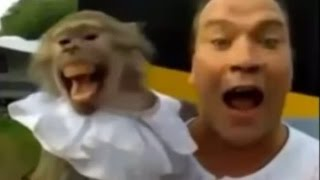 Funny Animals With Crazy Behavior - Animals Talking Video