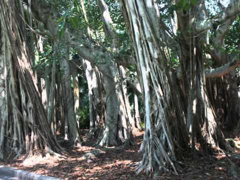 BANYAN TREE FLORIDA