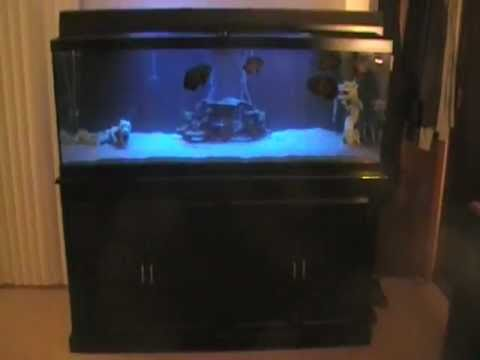 125 gallon tank best fish out there oscars stingray for Stingray fish tank