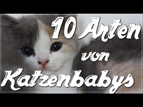 10 arten von katzenbabys meine zwei neuen katzenbabys anita girlietainment youtube. Black Bedroom Furniture Sets. Home Design Ideas
