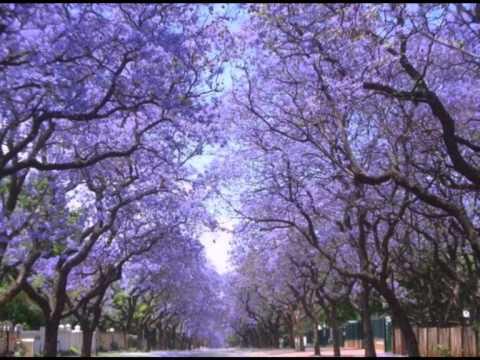 Пурпурный тоннель в Йоханнесбурге