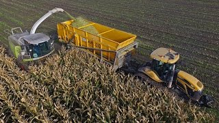 A-Maize-ing harvest! | ERF | 2 trailers on tracks | Challenger MT765C & JD 6215R