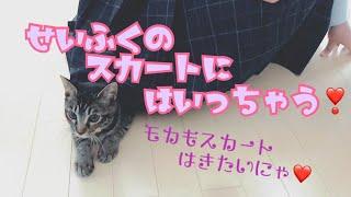 制服のスカートに入る子猫【モカの成長記録】The cat which likes entering a skirt thumbnail