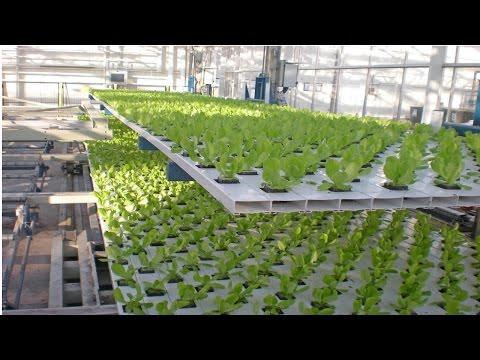 Curso Hidroponia Cultivo de Tomate - Produção de Mudas