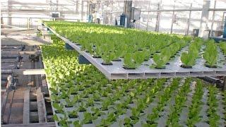 Curso Hidroponia Cultivo de Tomate - Pro...