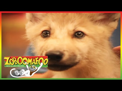 Zoboomafoo: Superclaw (Complete Episode) Part 1/2 by Enoch