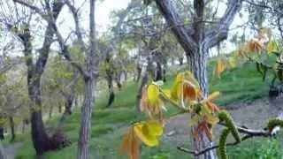 Arak Gerdoo 92.2.6 (اراک، گردو، طبیعت پاک)