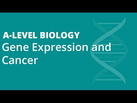 Gene Expression and Cancer Part 1 | A-level Biology | OCR, AQA, EDEXCEL