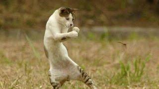 Самые смешные приколы с котами. Funny cats.